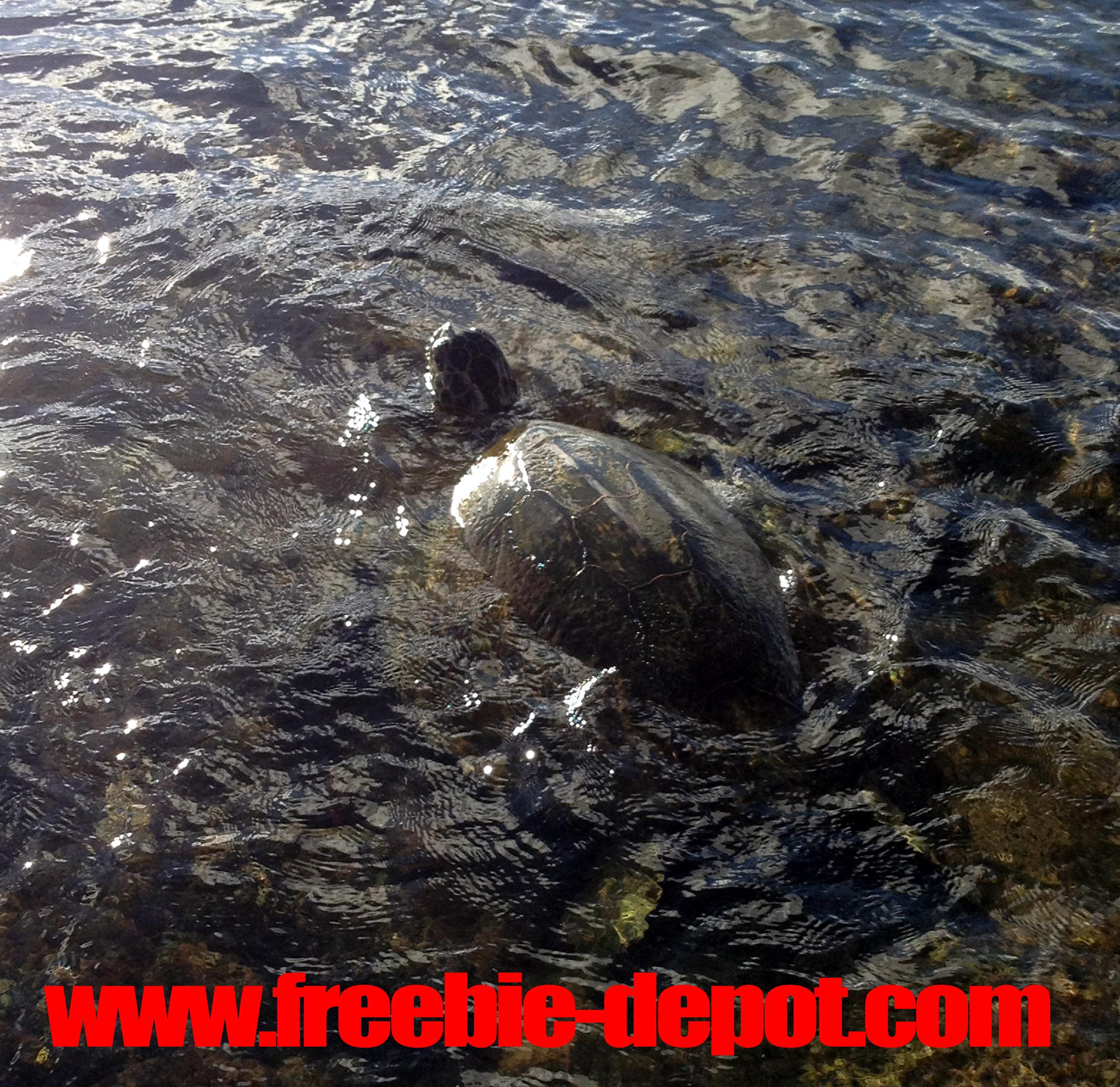 Free Sea Turtle Watching