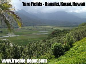 Free Kauai Taro Culture