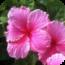 Free Kauai Island App