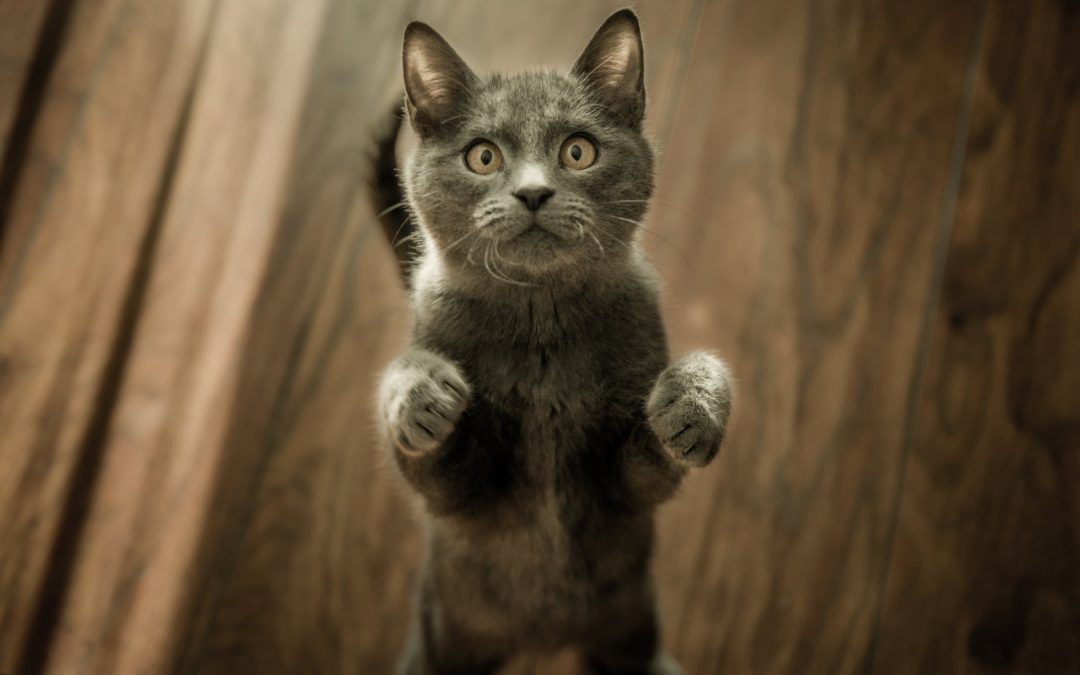 #CATURDAY FREEbies – FREE Stuff for Cats & Cat Lovers!