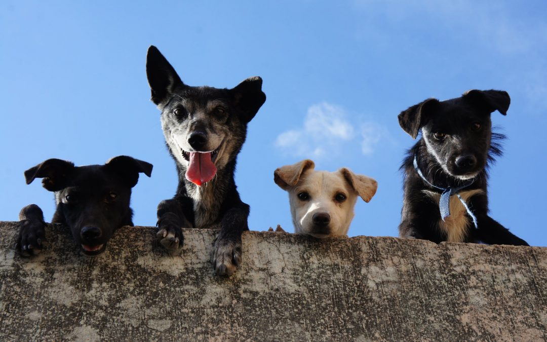 WOOF! FREEbies for Dogs and Puppies! Dog Food Samples, Books and SO much MORE!